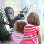 Children - Orangutan exhibit
